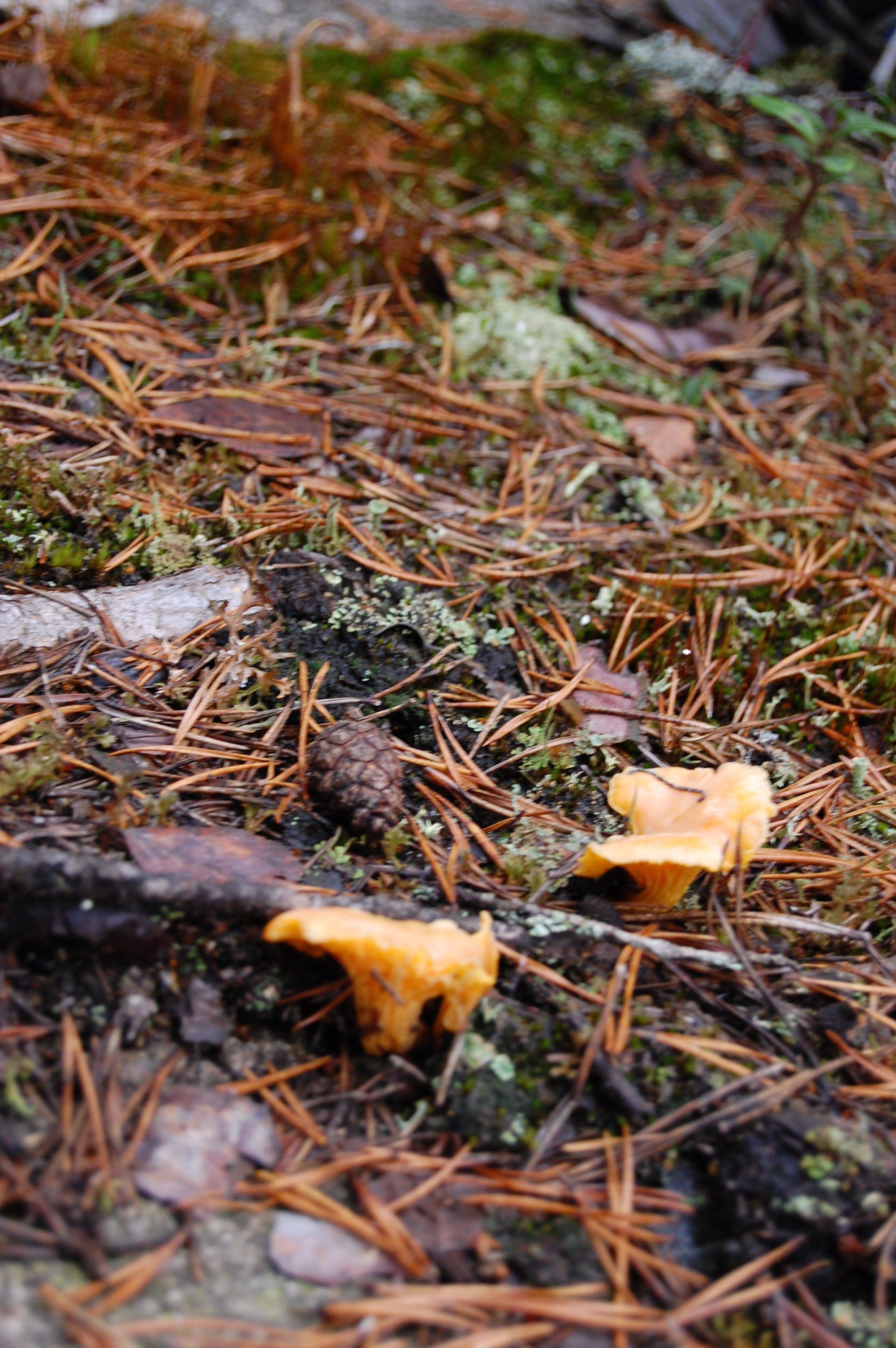 stockholm_hike_mushrooms1