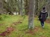 stockholm_hike_woods