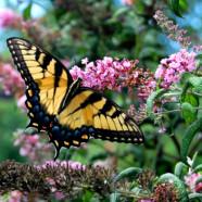 Butterfly in Virginia